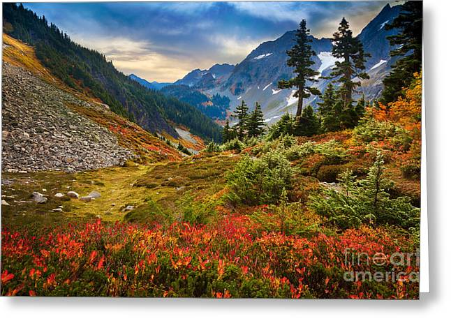 Conifer Tree Greeting Cards - Cascade Pass Fall Greeting Card by Inge Johnsson