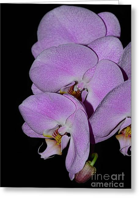 Orchids Art Greeting Cards - Cascading Lilac Orchids by Kaye Menner Greeting Card by Kaye Menner