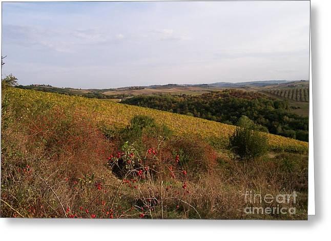 Castellina In Chianti Wineyards Greeting Card by GPhotoart CPhotoart