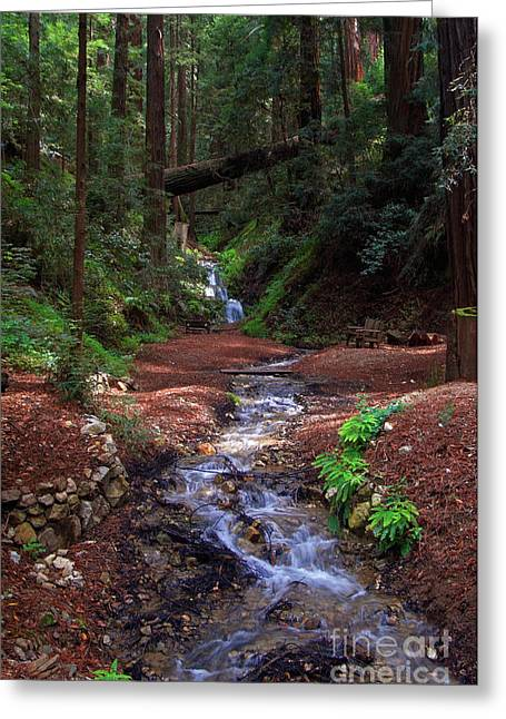 Big Sur Greeting Cards - Castro Canyon in Big Sur Greeting Card by Charlene Mitchell