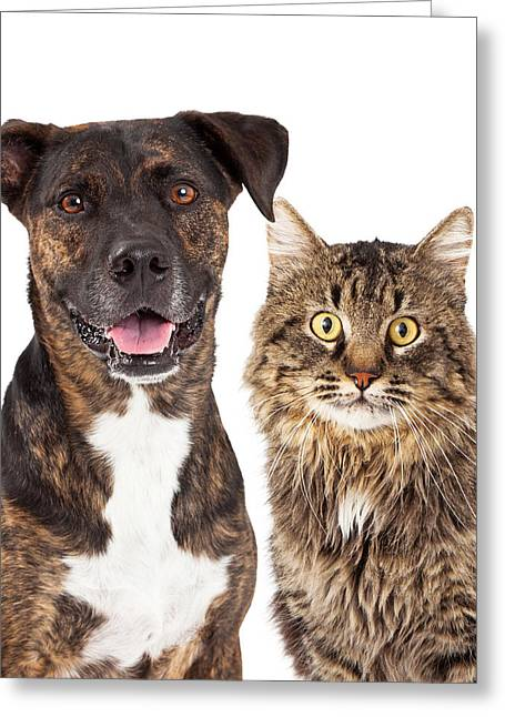 Cat And Dog Closeup Greeting Card by Susan Schmitz