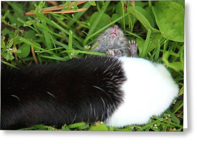 Jouko Mikkola Greeting Cards - Cat and mouse Greeting Card by Jouko Mikkola