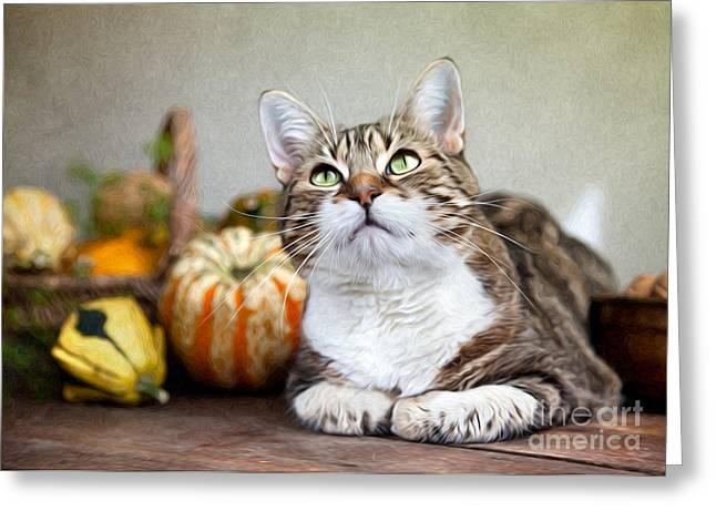 Relaxed Greeting Cards - Cat and Pumpkins Greeting Card by Nailia Schwarz