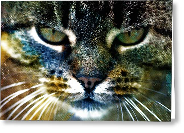 Cat Face Greeting Cards - Cat Art Greeting Card by Frank Tschakert