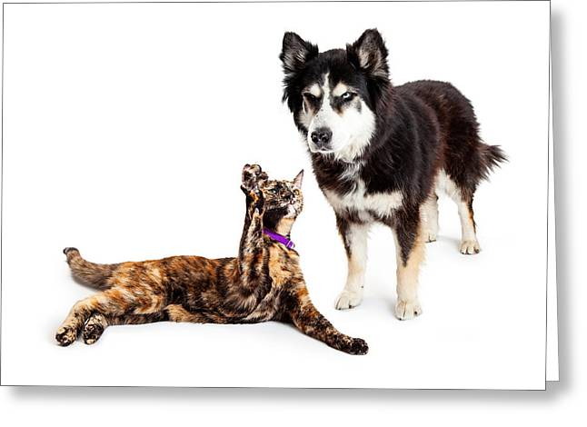 Huskies Photographs Greeting Cards - Cat Batting at Angry Dog Greeting Card by Susan  Schmitz