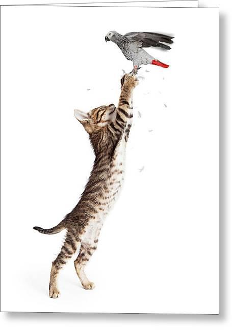 Cat Catching Bird In Flight Greeting Card by Susan Schmitz