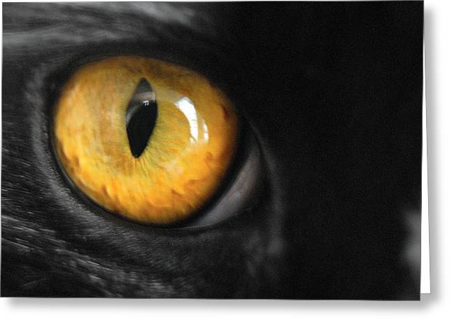 Cats Photographs Greeting Cards - Cat Greeting Card by Craig Incardone