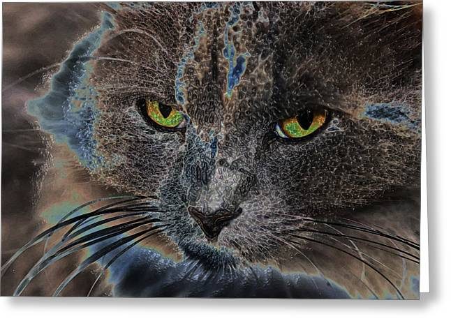 Gray Hair Greeting Cards - Cat Eyes Greeting Card by Ronnie Corn