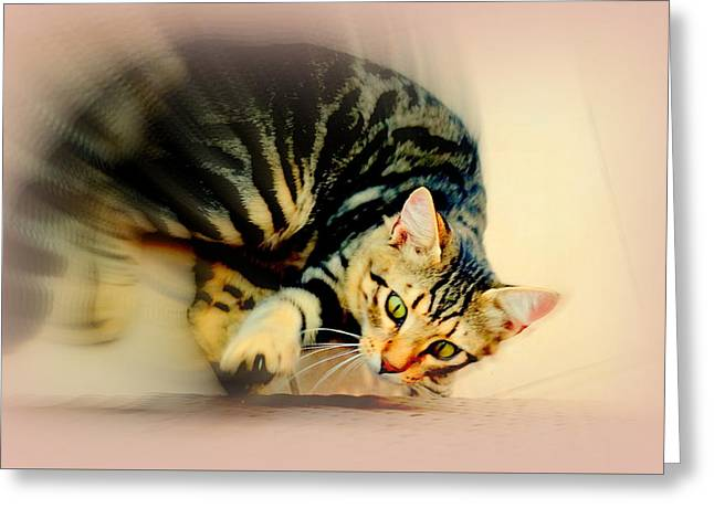 Obligation Greeting Cards - Cat F  Greeting Card by Hilde Widerberg