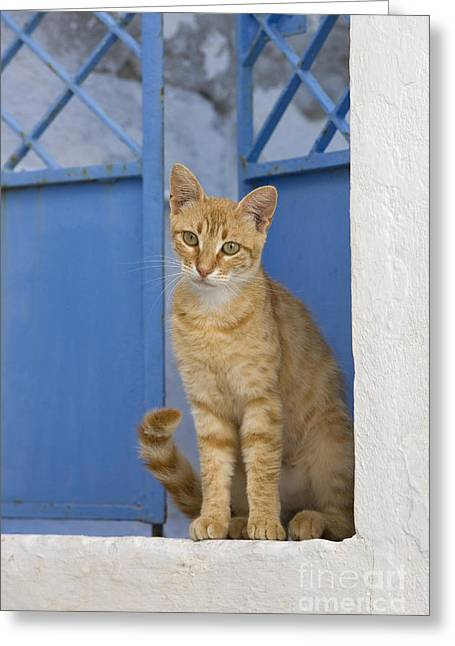 House Pet Greeting Cards - Cat In A Doorway, Greece Greeting Card by Jean-Louis Klein & Marie-Luce Hubert