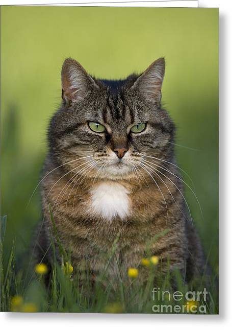 Domestic Pet Portraits.house Cat Greeting Cards - Cat In A Garden Greeting Card by Jean-Louis Klein & Marie-Luce Hubert