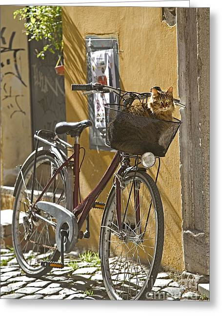 Trastevere Greeting Cards - Cat In Bike Basket Greeting Card by Jean-Michel Labat