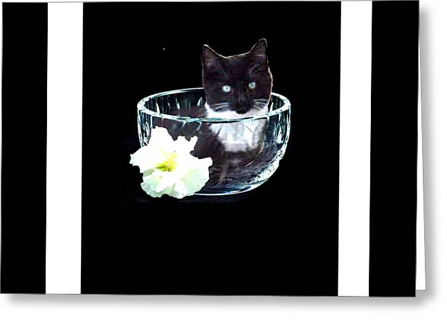 Tuxedo Digital Art Greeting Cards - Cat in Bowl Greeting Card by Jacquie King
