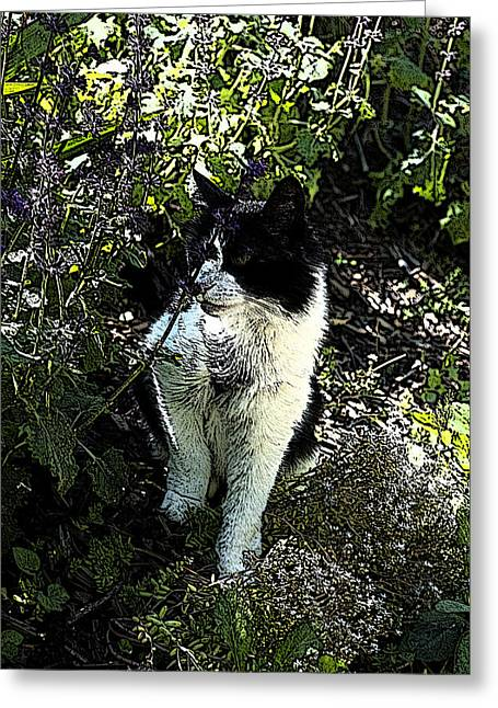 Kitten Prints Greeting Cards - Cat in the Garden 1 Greeting Card by Emily Heuerman