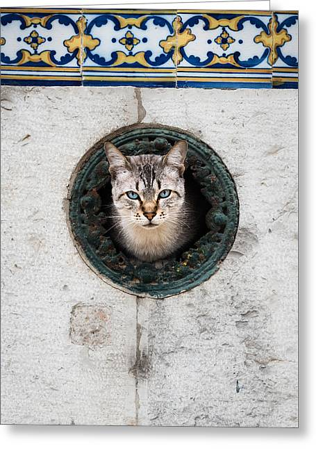 Domestic Pet Portraits.house Cat Greeting Cards - Cat In The Wall I Greeting Card by Marco Oliveira