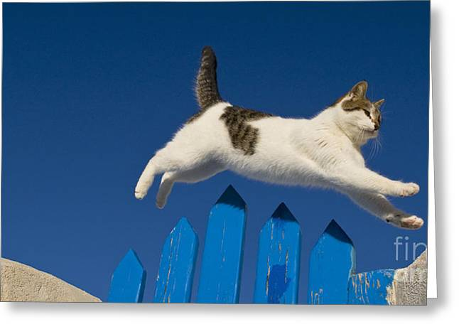 Cat Jumping A Gate Greeting Card by Jean-Louis Klein & Marie-Luce Hubert