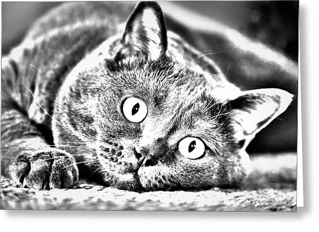 Cat Pyrography Greeting Cards - Katrin Greeting Card by Olga Photography
