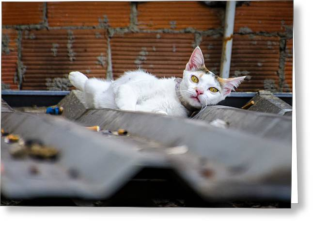 Eys Greeting Cards - Cat On A Tin Roof - Brazil Greeting Card by Jon Berghoff