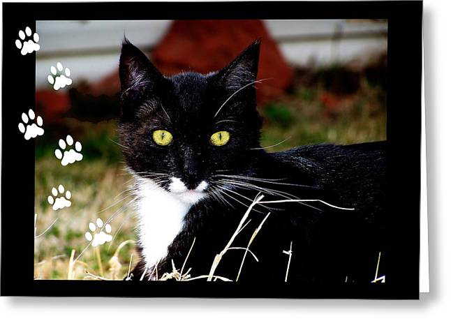 Colorful Photography Greeting Cards - Cat Paws Greeting Card by Karen M Scovill