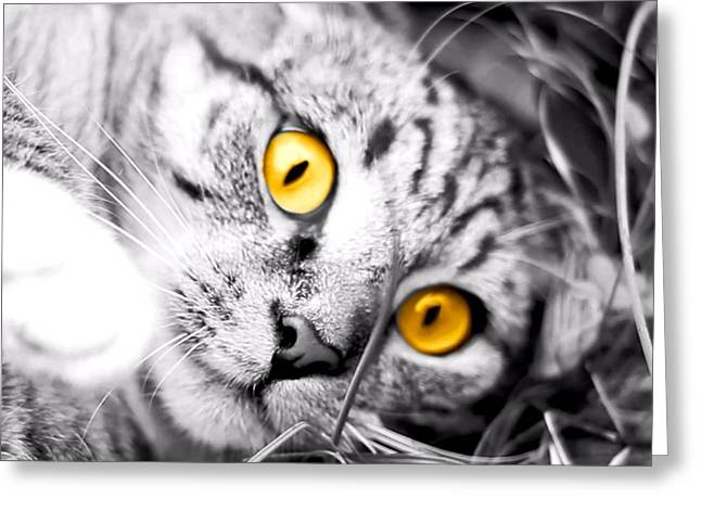 Charlotte Digital Art Greeting Cards - Cat Play black and white Greeting Card by Morgan Carter