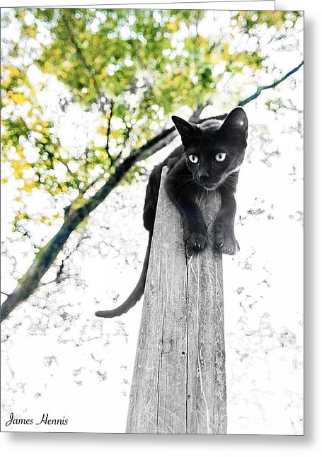 Kitten Tapestries - Textiles Greeting Cards - Cat Pose Greeting Card by James Hennis
