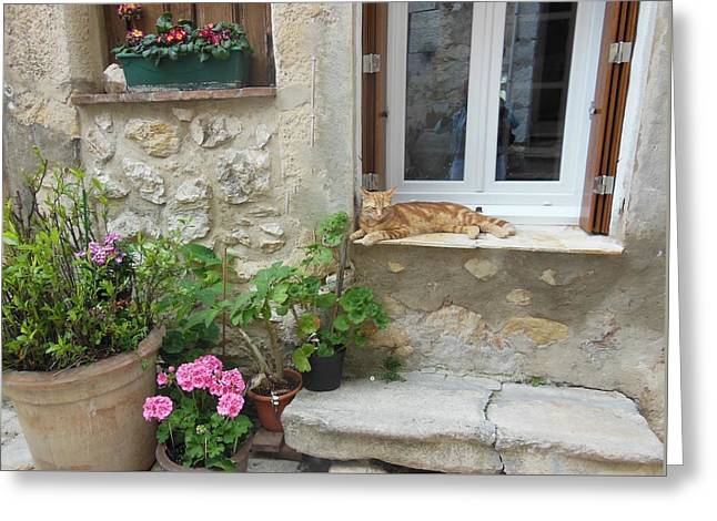 Cat Relaxing In St Paul De Vence Greeting Card by Marilyn Dunlap