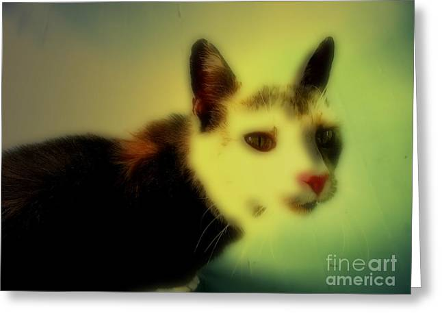 Cat Greeting Card by Steven  Digman