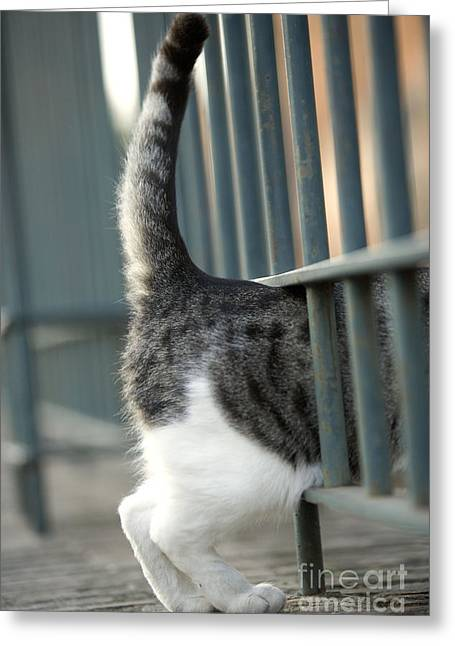 Squeezing Greeting Cards - Cat Walking Through Fence Greeting Card by Jean-Michel Labat
