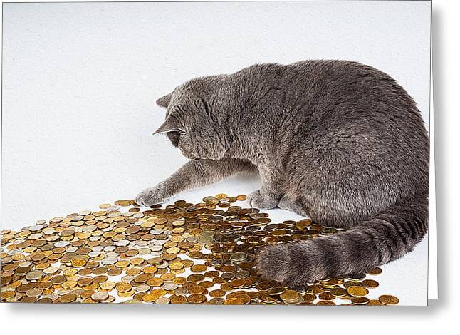 Coins Greeting Cards - Cat with coins Greeting Card by Queso Espinosa