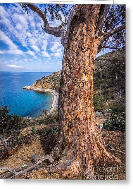 Photo . Portrait Greeting Cards - Catalina Island Lovers Cove Tree Greeting Card by Paul Velgos