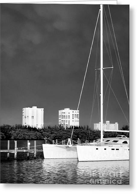 Saltlife Greeting Cards - Catamaran Greeting Card by Patrick M Lynch
