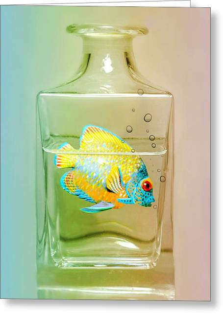 Swimming Fish Greeting Cards - Catch of the Day Greeting Card by Diana Angstadt