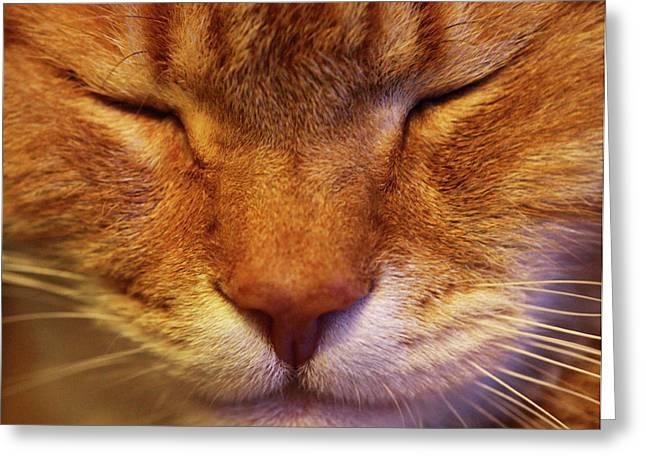 Jouko Mikkola Greeting Cards - Catface Greeting Card by Jouko Mikkola