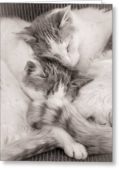 Companionship Greeting Cards - Catnapping Greeting Card by Jim Hughes