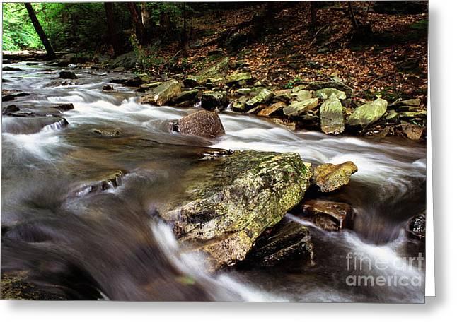 Fishing Creek Greeting Cards - Catoctin Mountain  Greeting Card by Thomas R Fletcher