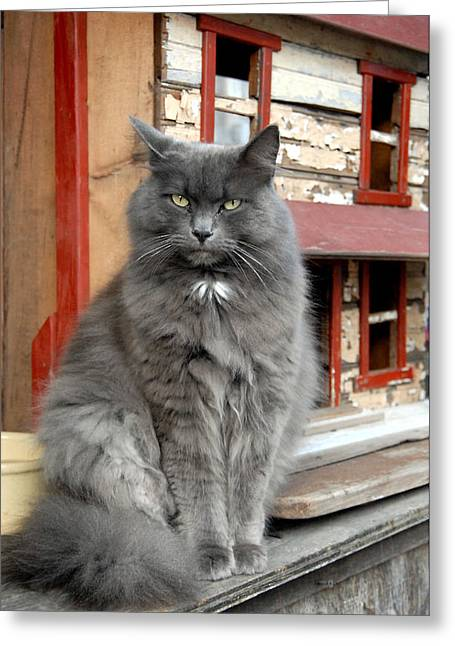 Litter Mates Photographs Greeting Cards - Cats 13 Greeting Card by Joyce StJames