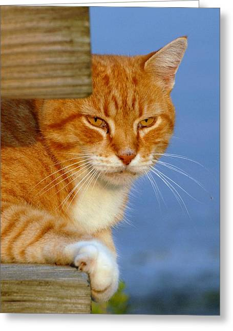 Litter Mates Greeting Cards - Cats 27 Greeting Card by Joyce StJames