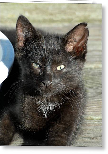 Best Sellers -  - Litter Mates Greeting Cards - Cats 28 Greeting Card by Joyce StJames