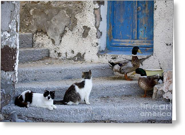 Fed Greeting Cards - Cats And Ducks In Greece Greeting Card by Jean-Louis Klein & Marie-Luce Hubert