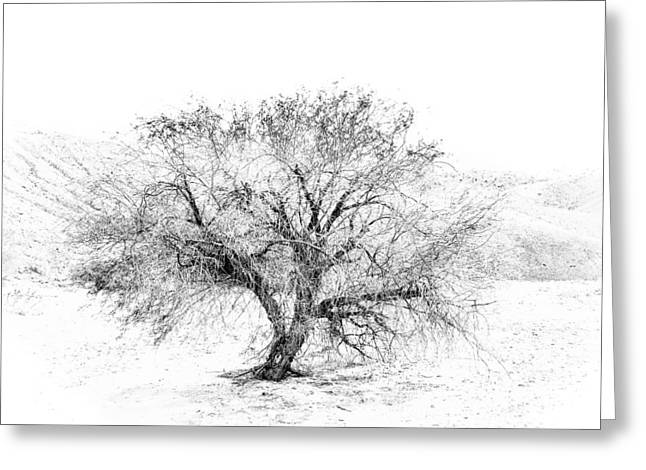 Tree. Acacia Greeting Cards - Cats Claw Greeting Card by Joseph Smith
