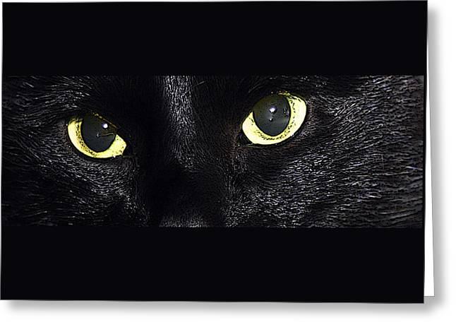 Vince Greeting Cards - Cats Eyes Panorama Greeting Card by John Haldane