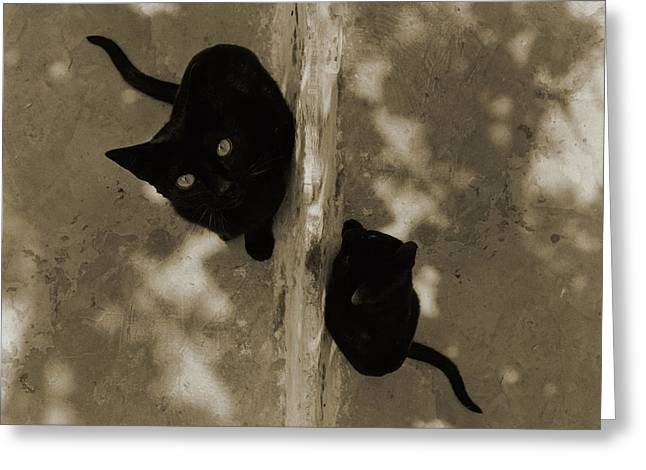 Cat Photographs Greeting Cards - Cats Greeting Card by Michael Mogensen