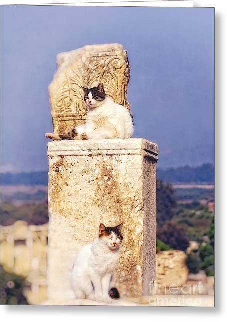 cats of Ephesus Greeting Card by HD Connelly