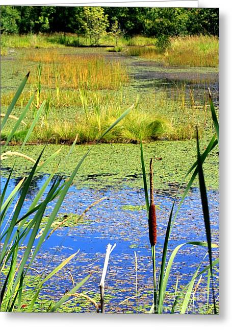 Chris Anderson Photography Greeting Cards - Cattail Greeting Card by Chris Anderson