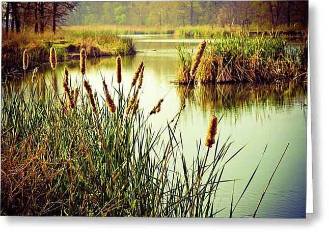 Spring Scenes Photographs Greeting Cards - Cattails in Lake Murray Greeting Card by Iris Greenwell