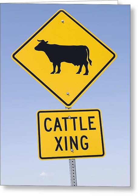 Cow Images Greeting Cards - Cattle Crossing Road Sign Greeting Card by Donald  Erickson