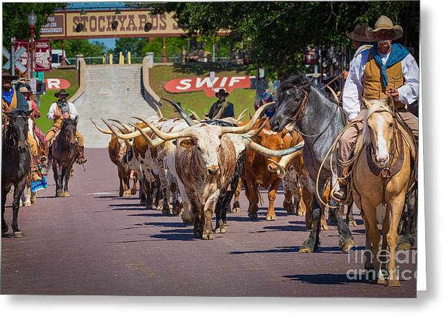 Folks Humans Greeting Cards - Cattle Drive Greeting Card by Inge Johnsson