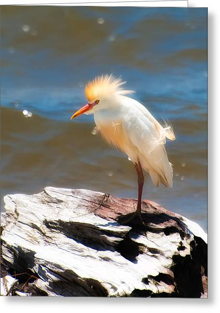 Cattle Egret Greeting Cards - Cattle Egret in Breeding Plumage Greeting Card by Rich Leighton
