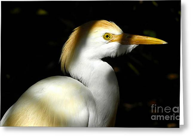 Cattle Egret Greeting Cards - Cattle Egret in Shadow Greeting Card by David Lee Thompson