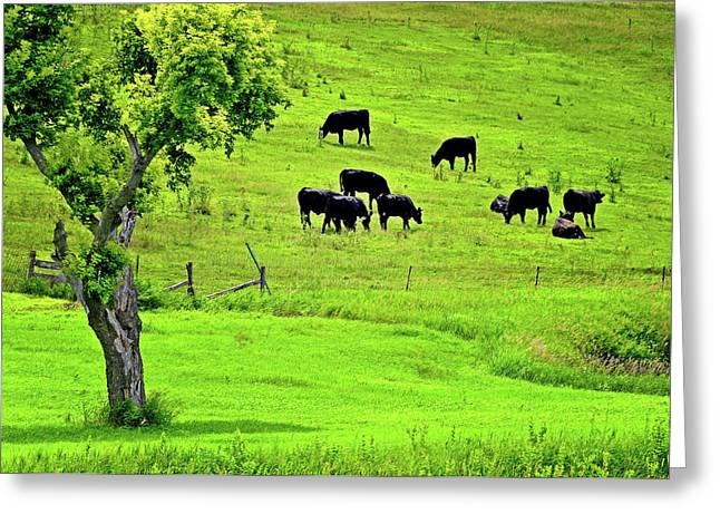 Lyle Huisken Greeting Cards - Cattle Grazing Greeting Card by Lyle  Huisken